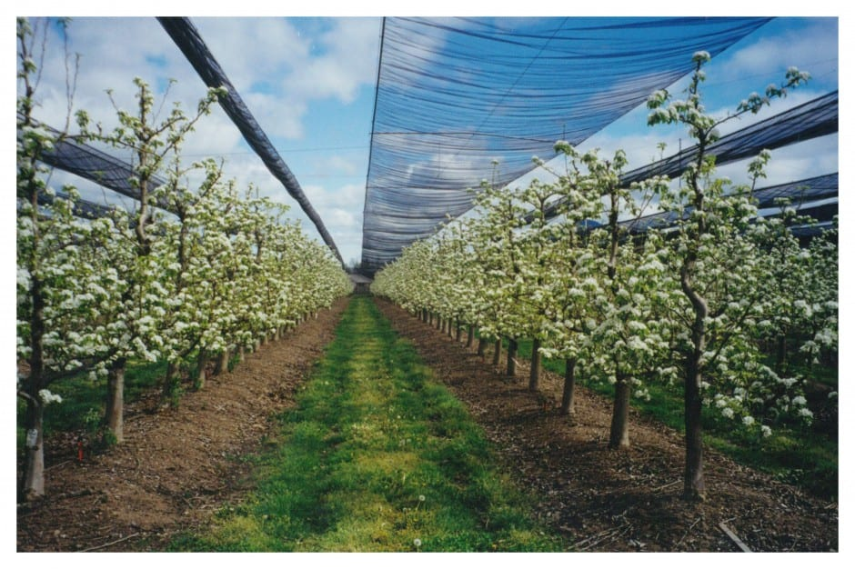 retractable shade canopy weathersolve agricultural