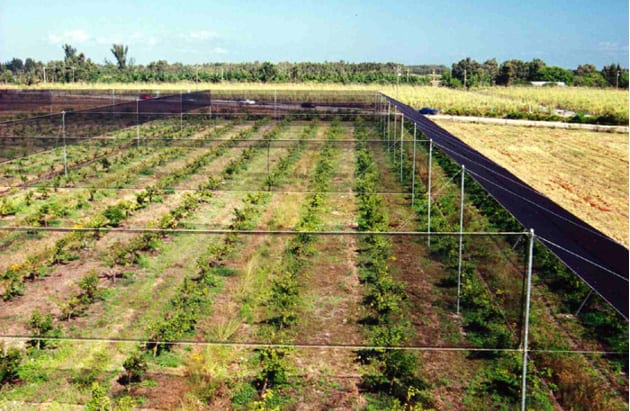 Grid style wind protection - Crop protection