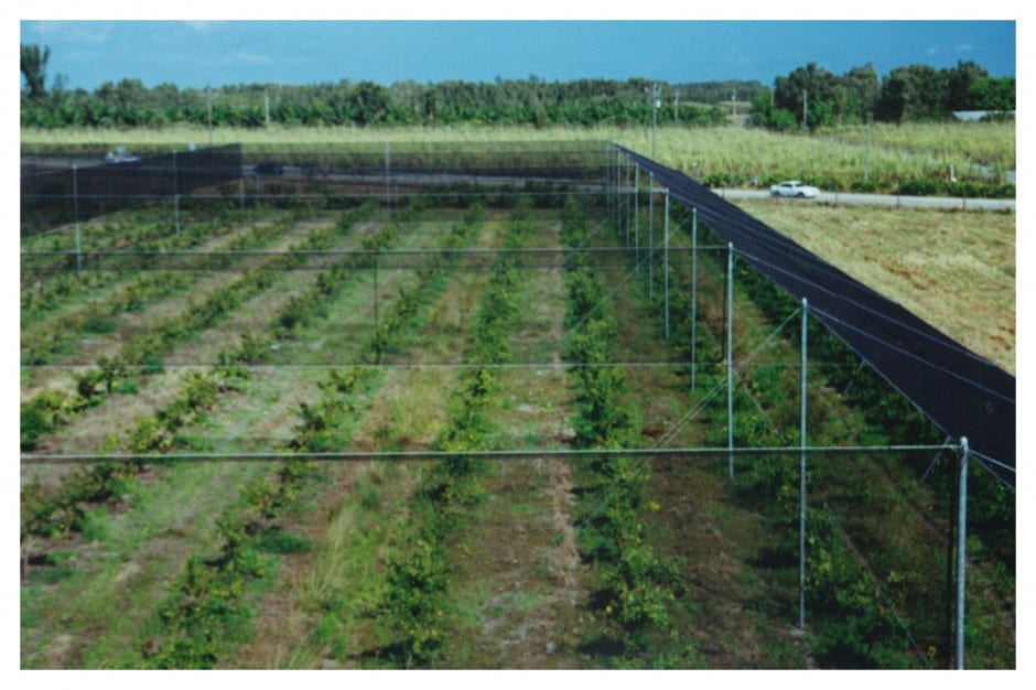grid style fencing weathersolve agricultural solutions