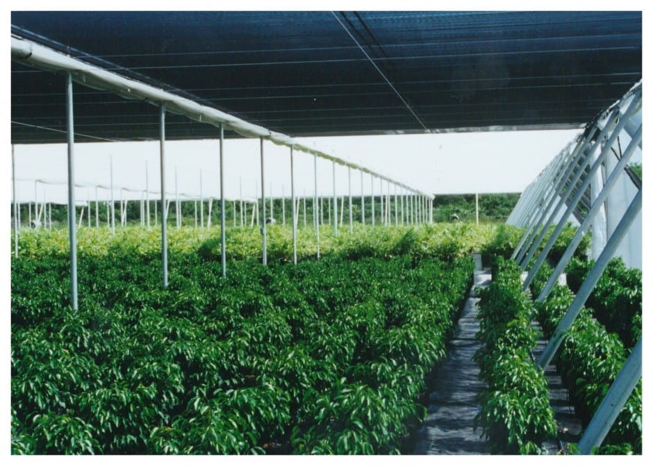 shade house canopy / hail solution weathersolve agricultural