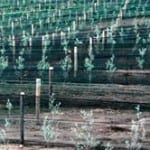 Wind fencing trellising weathersolve agricultural