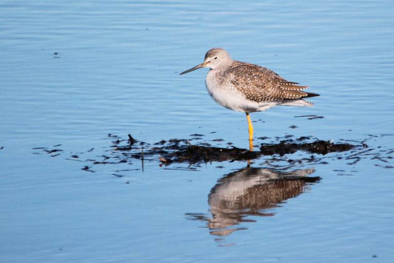 Sandpiper by Samantha Penner